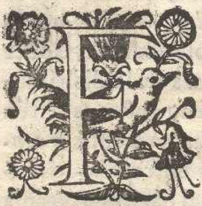 Detail of Initial or Dropped Capital from Francisco Nuñez Melián's Report