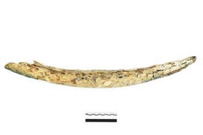 Ivory Tusk (1986.008.0656a)